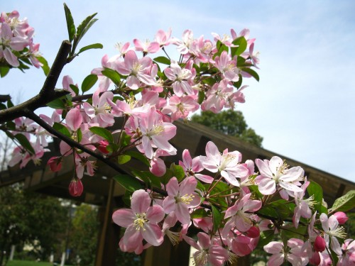 科技园里面的小花园,麻雀虽小,小桥流水和亭廊一样不缺,更有大量鲜花点缀其中