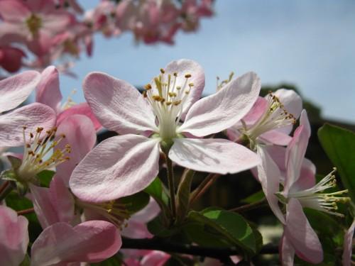 很喜欢这样的环境,无数鲜花在呼应着那温和的阳光