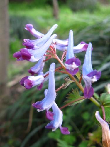 紫蓝色的小鸟