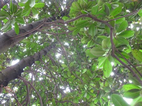 树底下朝上看