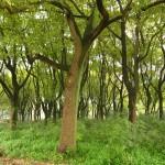 树林,精灵之域
