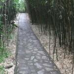 竹园中的幽幽小径