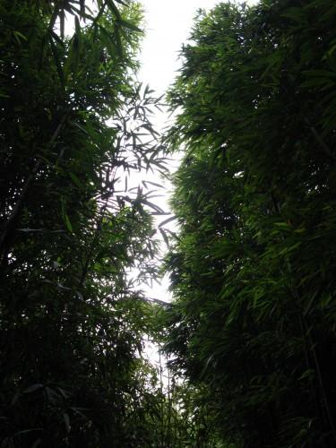 竹园中的天空