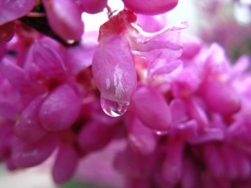 连花也在落泪