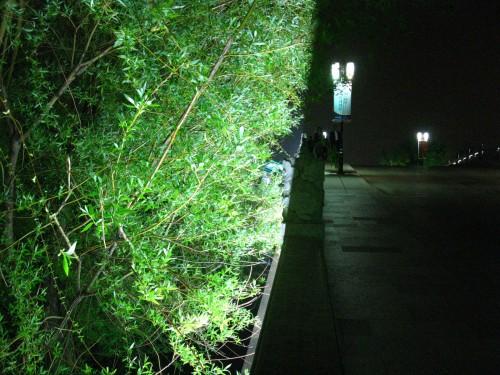 苏州不少的夜灯都是用来照树的